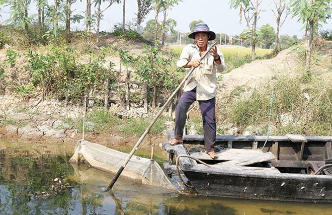 Hang nghin nong dan Tien Giang bo Tet lo cuu lua hinh anh 1