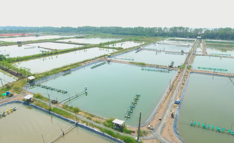 Khu vực nuôi tôm  tập trung tại xã Phú Tân, huyện Tân Phú Đông nhìn từ trên cao.  Ảnh: TRẦN LIÊM