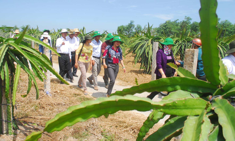 Tham quan mô hình trồng thanh long của nông dân ở huyện Gò Công Đông.                                                                                                                                            Ảnh: SĨ NGUYÊN