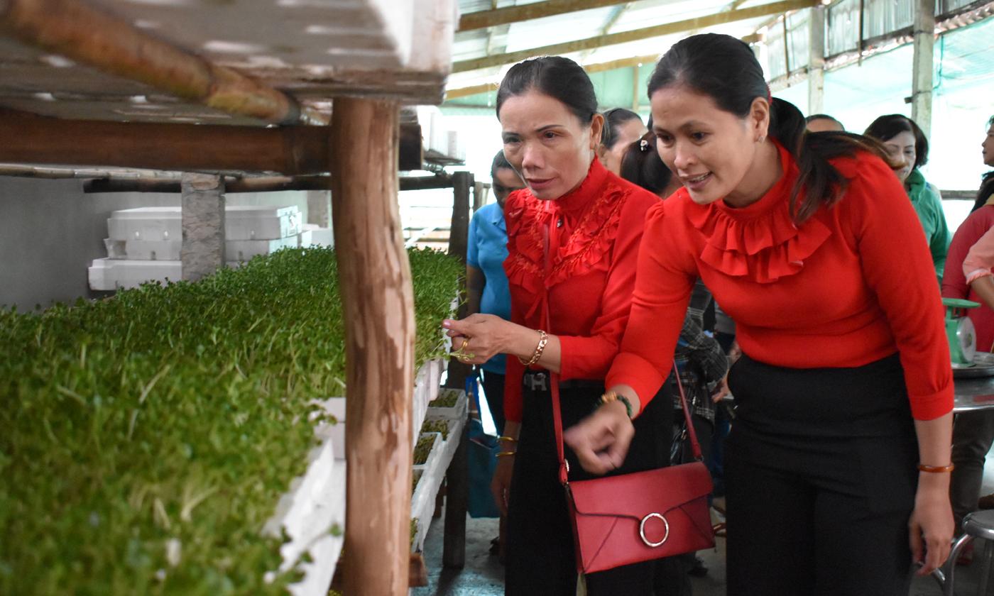 Các học viên tham quan mô hình sản xuất rau mầm tại HTX Nông nghiệp Thương mại Dịch vụ Trường Phát
