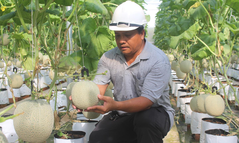 Tiêu chí sản xuất là vấn đề được tỉnh Tiền Giang quan tâm hàng đầu trong xây dựng NTM.                                                                                                Ảnh: MINH THÀNH