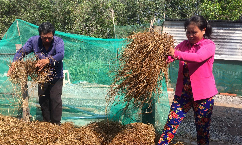 Vợ chồng chị Nguyễn Thị Vân với mô hình trồng nấm rơm.