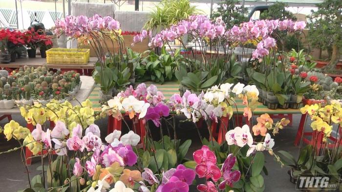 Cho hoa Tet3