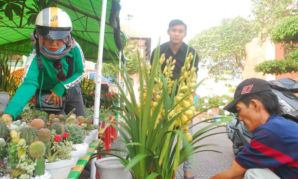 Hoa lan Đà Lạt được bán với giá 1 đến 3 triệu đồng/chậu.