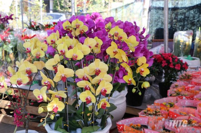 5-hoa lan