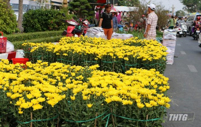 3- hoa cuc