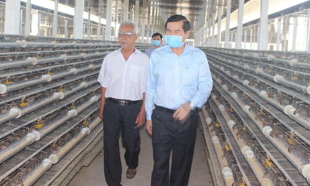 Chủ tịch UBND tỉnh Lê Văn Hưởng thăm Trang trại nuôi chim cút của ông Nguyễn Hồ.