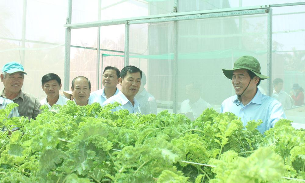 Chủ tịch UBND tỉnh Lê Văn Hưởng thăm cơ sở sản xuất rau sạch Tiến Phát.