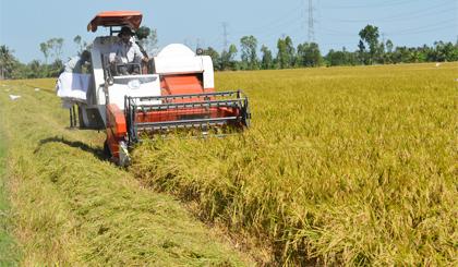 """Nông dân """"kêu trời"""" vì vật tư tăng cao, giá lúa giảm mạnh"""