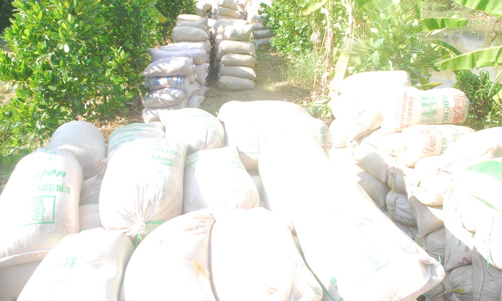 Lượng lúa trong dân còn tồn đọng vì thương lái chậm thu mua.