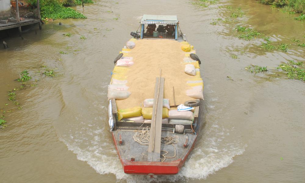 Một chiếc ghe của thương lái vừa mua đầy lúa của nông dân lưu thông trên địa bàn xã Hậu Mỹ Trinh (huyện Cái Bè)
