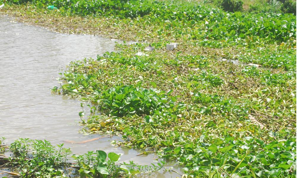 Tuyến kinh Trần Văn Dõng rất quan trọng trong việc đưa nước về vùng cuối nguồn thuộc Dự án Ngọt hóa Gò Công. Tuy nhiên, tuyến kinh này cũng bị phun thuốc diệt cỏ để diệt lục bình, cỏ nhằm khai thông dòng chảy.