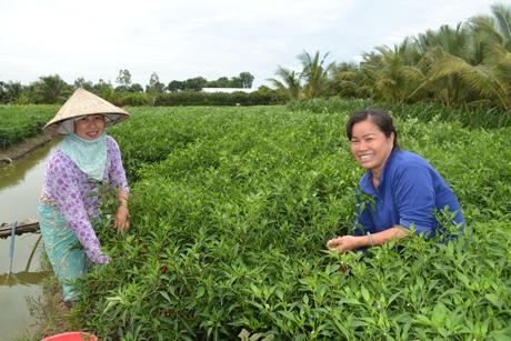 Đẩy mạnh cho vay nông nghiệp, nông thôn góp phần hạn chế tín dụng đen.