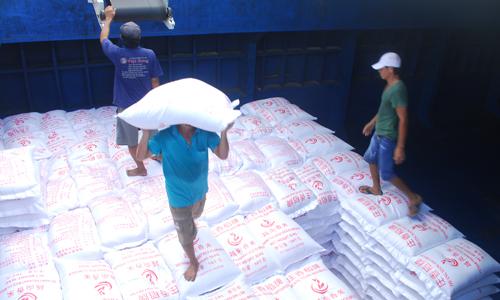 Công ty TNHH Việt Hưng đang đẩy mạnh thu mua lúa, gạo.