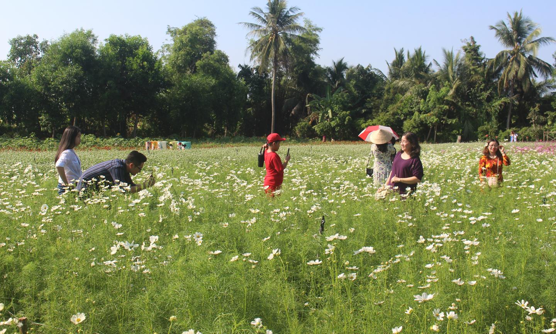Dịp lễ, mỗi ngày vườn hoa Mãn Đình Hồng (TP. Mỹ Tho) đón khoảng 600 lượt khách tham quan, chụp ảnh.