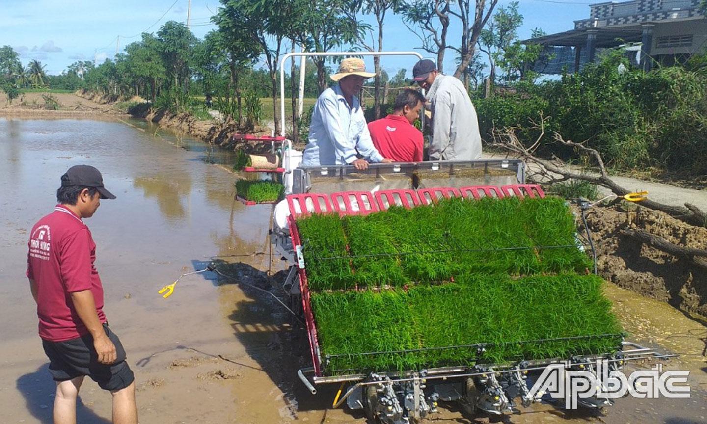 Mô hình sản xuất lúa sạch của HTX Dịch vụ nông nghiệp Tăng Hòa.