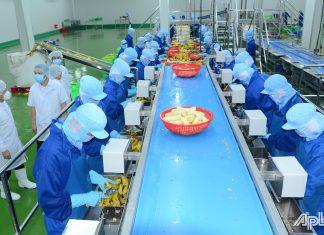 Dây chuyền chế biến rau quả cấp đông của Nhà máy chế biến nông sản của Công ty cổ phần công nghiệp thực phẩm Thabico - Tiền Giang đia vào hoạt động.
