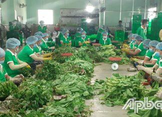 Nhiều mô hình liên kết tiêu thụ nông sản hiệu quả của HTX nông nghiệp ra đời.